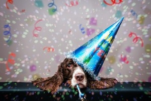 Tips For A Safe New Year's and Holiday For Your Pets - East El Paso Animal Hospital - El Paso, TX​