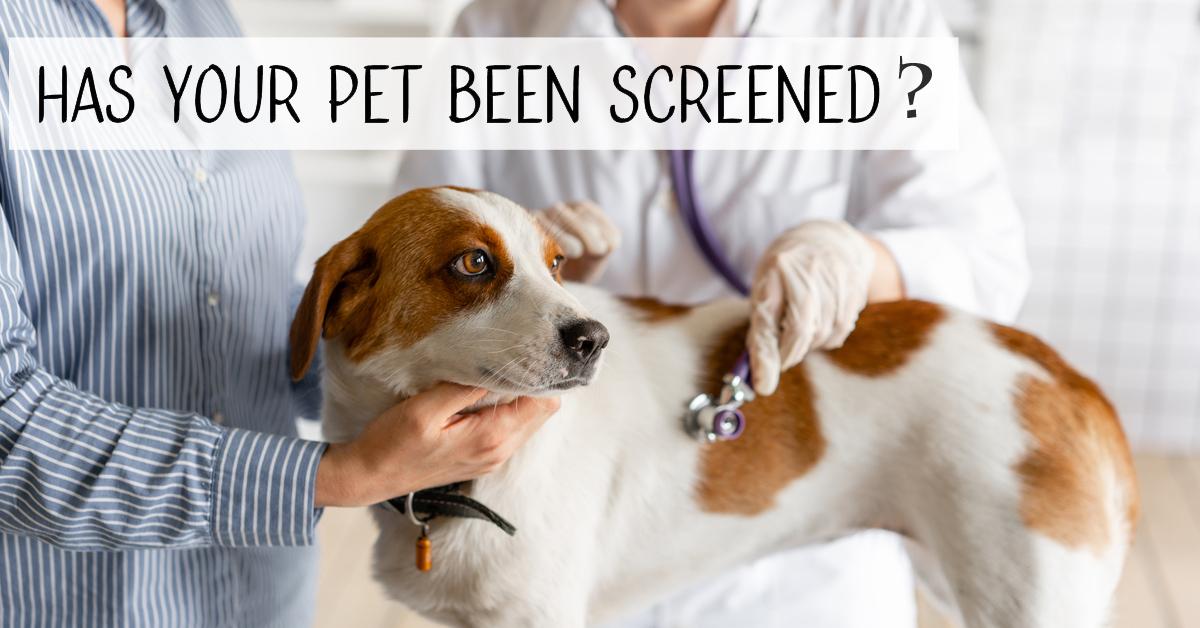 East El Paso Animal Hospital - Wellness Screening